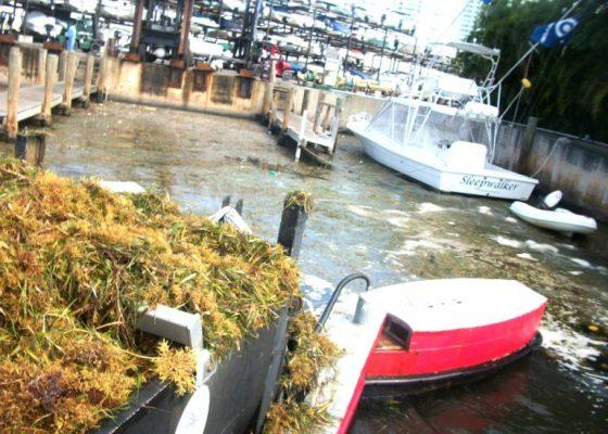 Water-Management-Technologies-Miami-Broward-Palm-Beach-Scavenger-Vessel-768x576